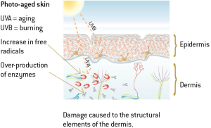 UV rays and photoaging diagram