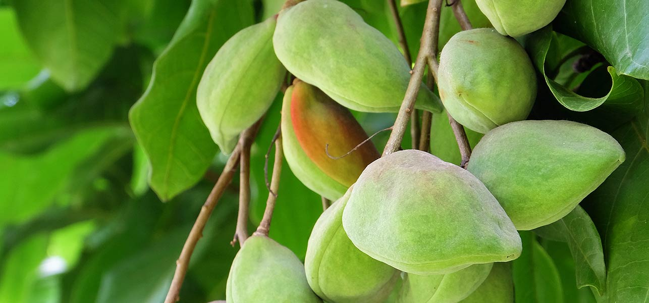 kakadu-plum-for-skin-hair-and-health